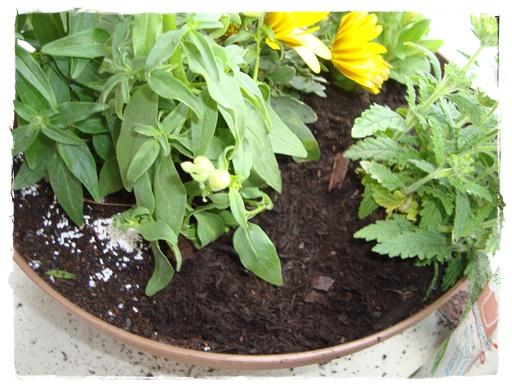 オルトランの上に腐葉土、バークチップを敷きます。マルチングといいます。