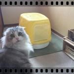100均のカンタン収納棚で猫トイレの悩み解消!