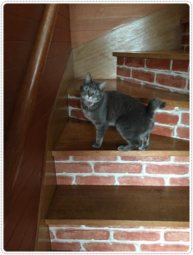 階段もリメイクしました!