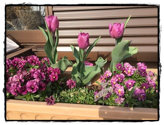 ミルフル寄せ植え紫