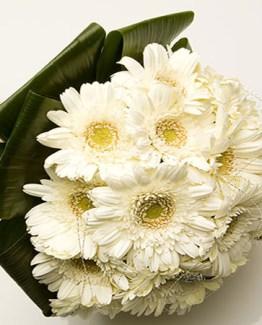 CF White Gerberas Bouquet