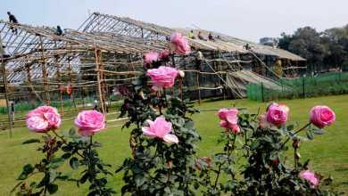 rose-festival-chandigarh-2018
