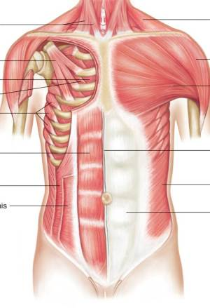 Chest Muscles | Chandler Physical Therapy