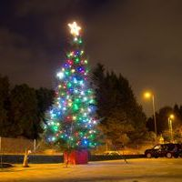 History of Selwood Christmas Tree in Chandler's Ford