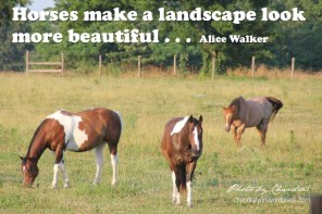 """""""Horses make a landscape look more beautiful""""--Alice Walker. Photo by Chandralynn!"""