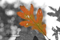 """Autumn,"" Original Photo 2014"