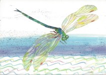 Week 21: From Marci (USA). The Very Quiet Cricket, Illustrated by Eric Carle.