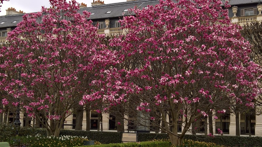 chatbots magnolias Palais Royal