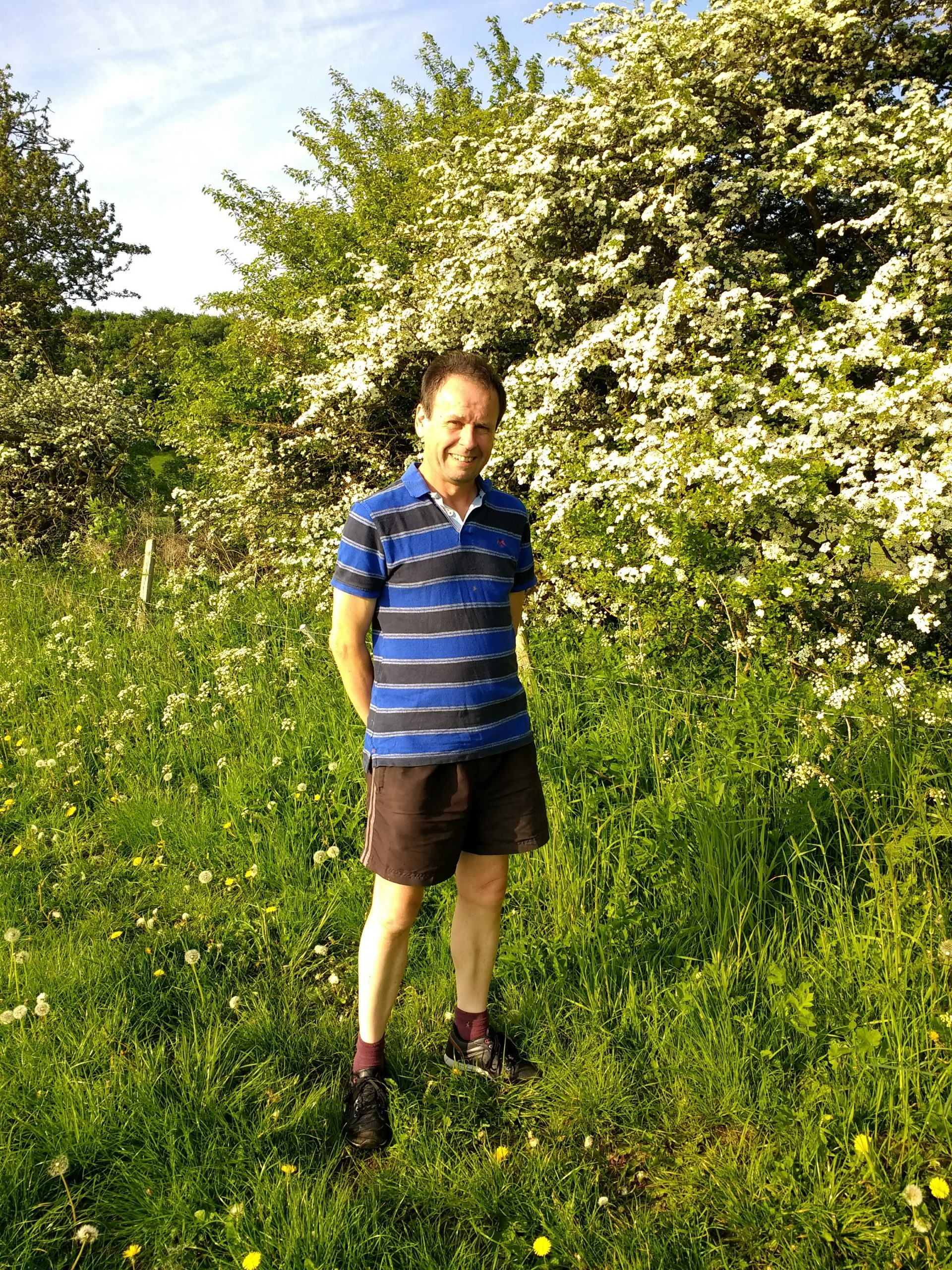 May blossom in the hedge
