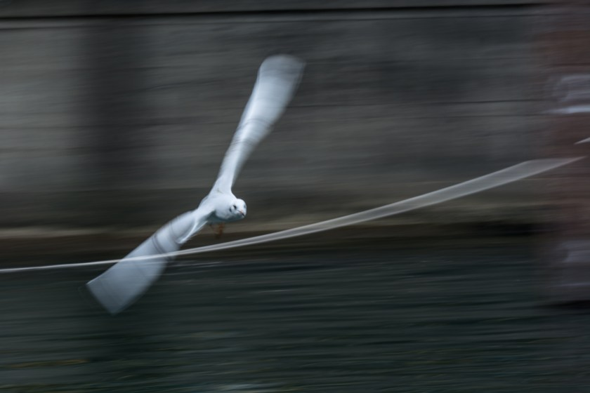 Bird flying so fast, it's wings are blurred