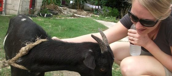 Meeting Corinne, Haiti Communitere's resident goat