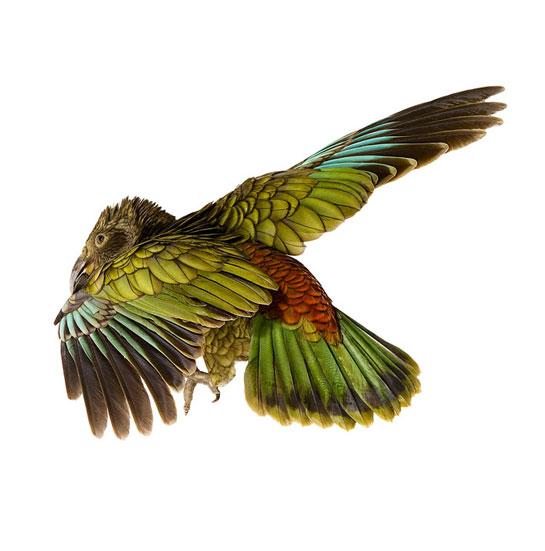 birdbooks.jpg