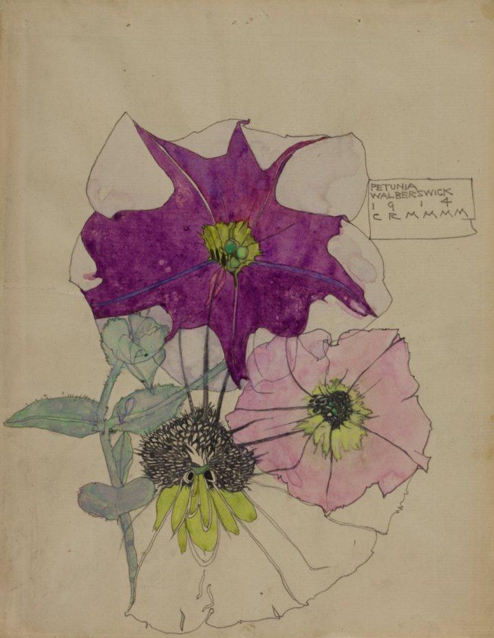 Petunia Walberswick 1914