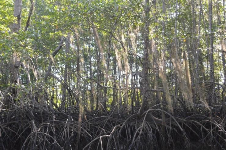 Costa Rica Mangrove