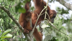 Gober on tree o4 (2)