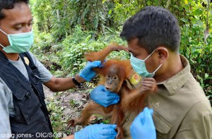 mother-and-baby-rescue-jan-15-enhanced-2460-1424443374-8