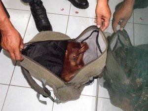trader  arrest wildlife conservation society