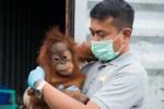 panut-with-orangutan