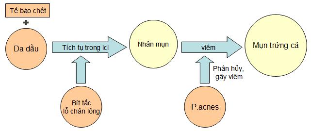 Phân loại mụn và cơ chế hình thành mụn