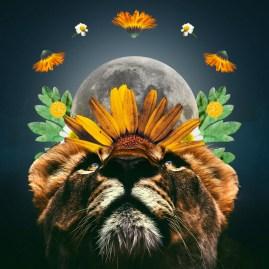 Horoscopes for the Full Moon in Leo - February 2020 ~ Chani Nicholas