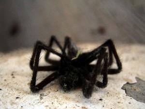 Spiders Make Good Vibrations