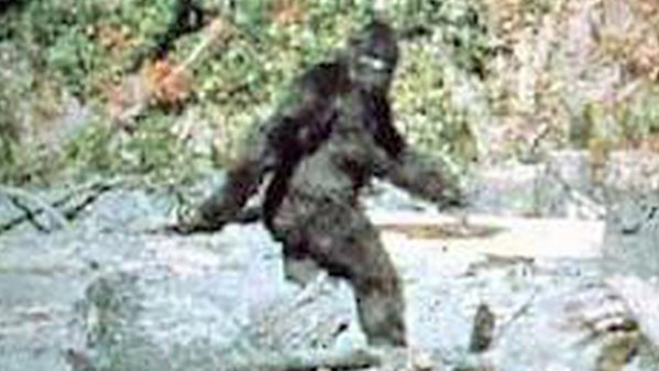 More About Bigfoot