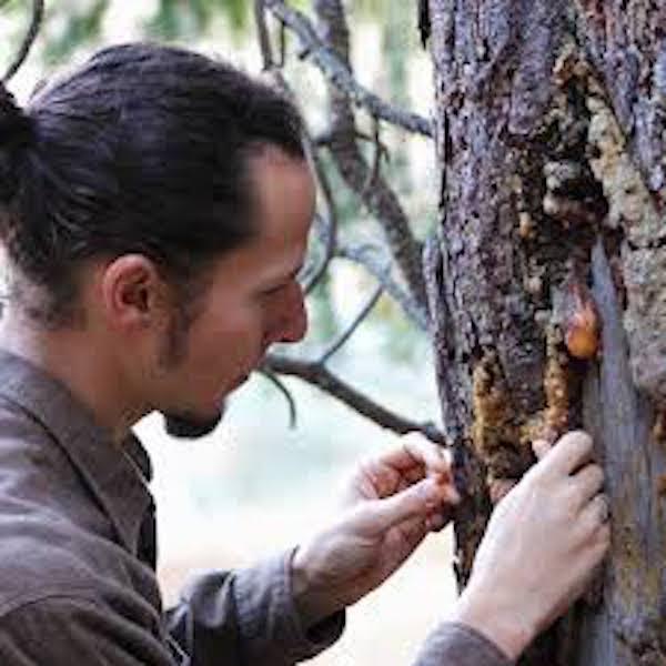Erik on the Healing Properties of Plants