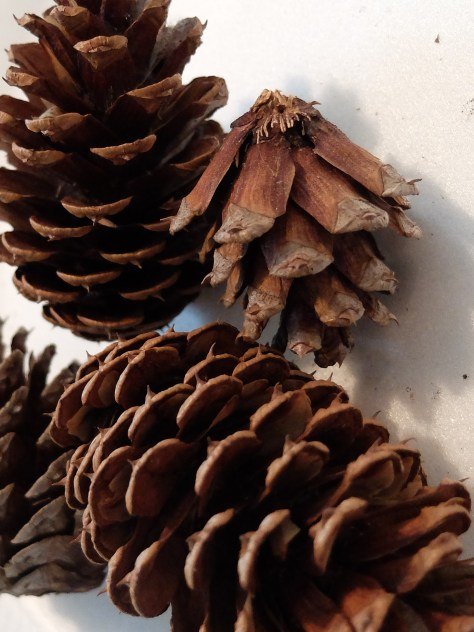 Transform Pine Cones into Pineapples for Tropical Parties