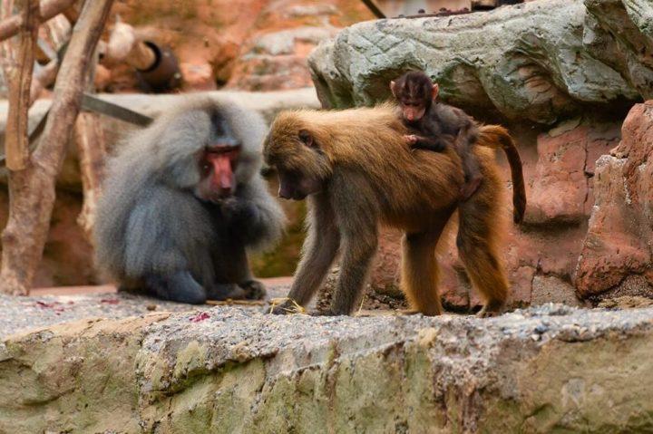 F0916-0056 PR4Photos - Paignton Zoo