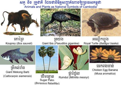 animalsplantscambodia1