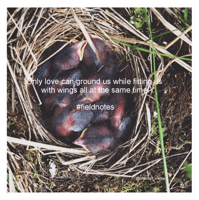 Only love can ground us while fitting us with us with wings all at the same time. #fieldnotes chantal wiebe shop