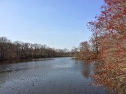 四月的夕阳湖,吐芽的近树,零星的莲叶,和卧在水面的野鹅。