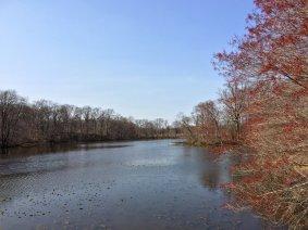 四月的夕陽湖,吐芽的近樹,零星的蓮葉,和卧在水面的野鵝。