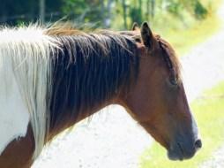 烈日下的马头