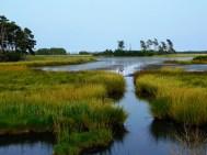 快樂的沼澤