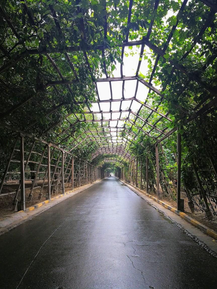 千里葡萄长廊