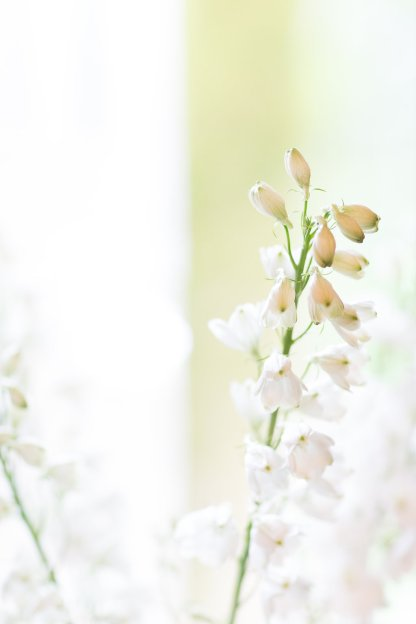 WMP_FlowerCrownWorkshop_21