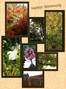 Herbst Stimmung_kindlephoto-32734268