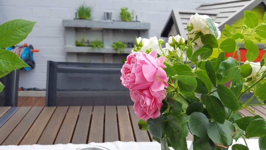 Wochenende_Elternblog_Gartenrosen