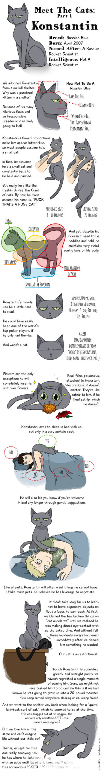 Meet The Cats: Konstantin