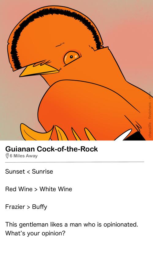 Birdr Bios: Guianan Cock-of-the-Rock