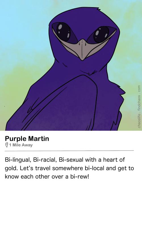Birdr Bios: Purple Martin