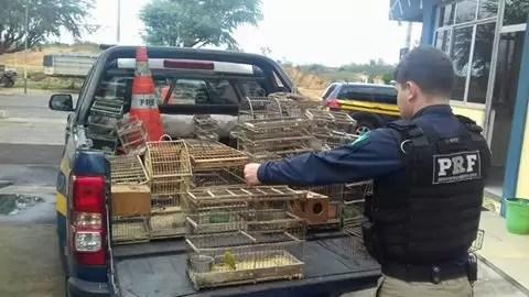 prf-resgata-passaros-silvestres-criados-em-cativeiro-em-itaberaba