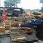 PRF resgata pássaros silvestres criados em cativeiro em Itaberaba