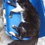 Cães e gatos morrem envenenados em Ipirá