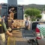 FPI: primeira semana termina com mais de 1000 animais resgatados