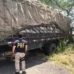 450 sacos de carvão vegetal são apreendidos pela PRF em Itaberaba