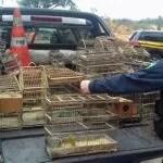 PRF e MP/BA realizam operação de combate a crimes ambientais em Itaberaba