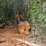 Polícia Civil de Ibicoara prende homens em flagrante por prática de crime ambiental