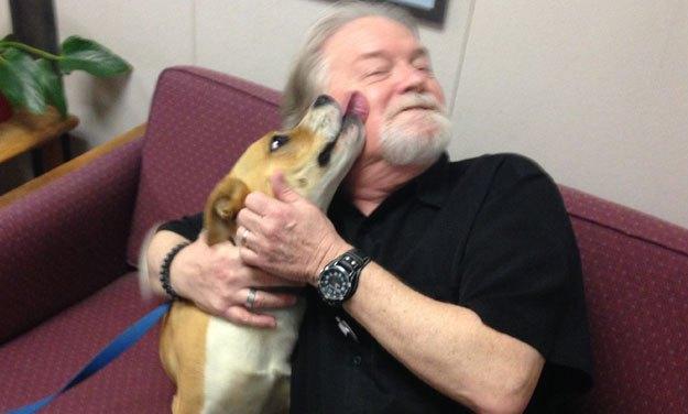 Adopt Mandy: A Beagle-Boxer Mix